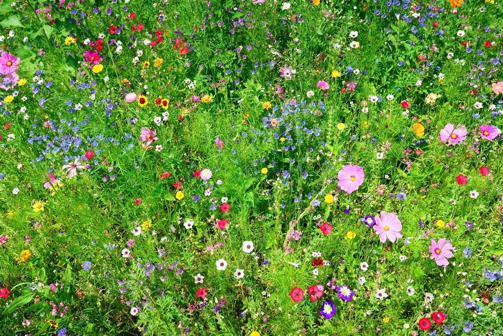 https://www.newlawns.co.uk/wp-content/uploads/2018/11/Wild-flower-lawn-Sussex.jpg